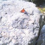 Schmetterling auf Stein