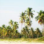 Palmen auf Goa