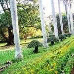 Park in Bangalore