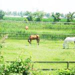 Pferde in Italien