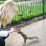 Sabrina DiAngelo mir Eichhörnchen
