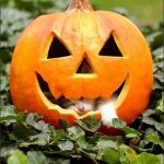 Jack O Lantern and cute cat